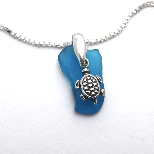 turquoise turtle 1