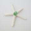 starfish2_edited-2